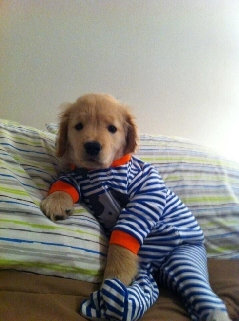 This puppy in a onesie is going to live forever. SHUT UP! YES HE IS! #OnesiePuppiesNeverDie
