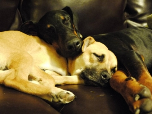 Two best friends cuddling together, just like we all hope to be able to do as we spend our final days alive, surrounded by loved ones.