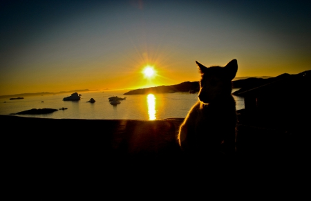 Awwwww, just look at this pup embrace the sunset as we all will have to when the final light of our lives shines upon the world.