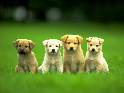 "Four puppies that think you should reread ""The Awakening."""