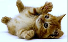 Nothing is cuter than this kitten. Nothing.
